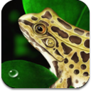frog-dissection-ipad